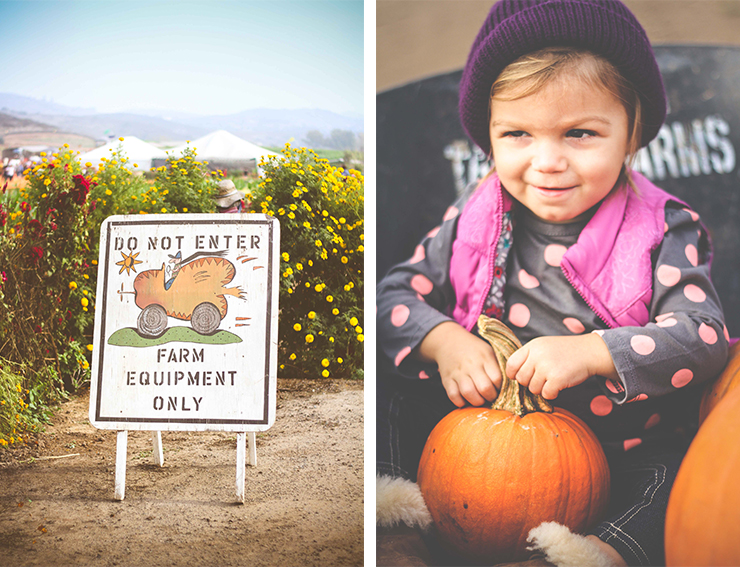 Tanaka Farms – A Day At The Pumpkin Patch
